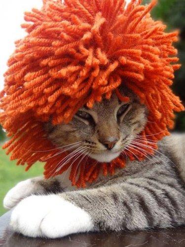Американская художница увлеклась вязанием шапочек для котов (18 фото)