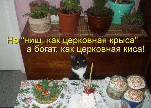 Кошки в котоматрице (30 фото)