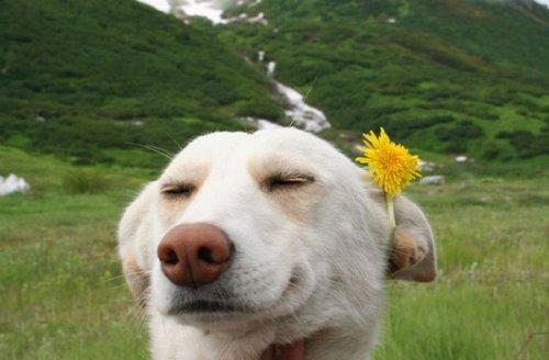 Собаки-улыбаки (22 фото)
