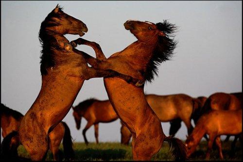Прекрасные лошади от фотографа Melissa Farlow (22 фото)