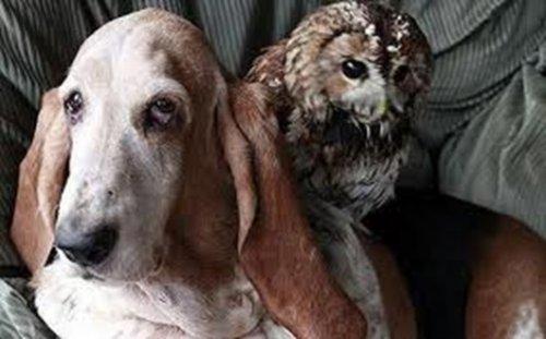 Животные-друзья (77 фото)