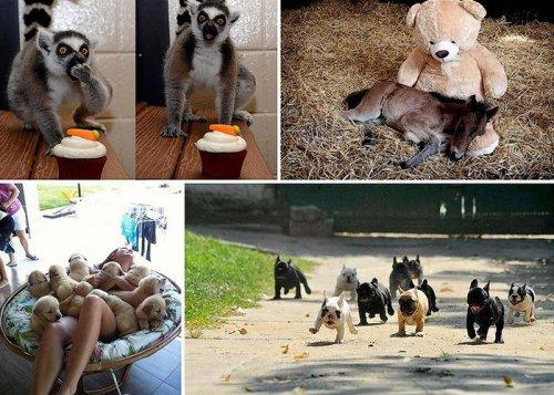 Фотографии животных, которые вы просто обязаны увидеть (50 фото)
