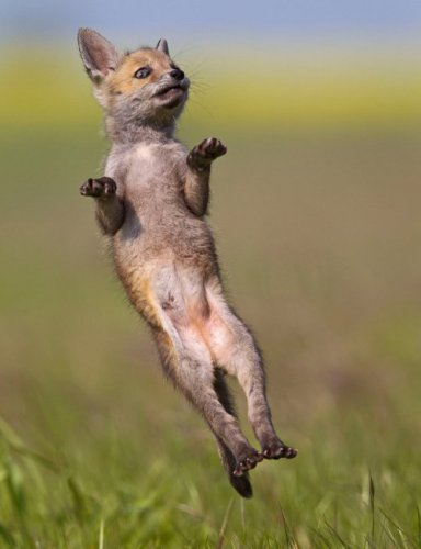 Животные на танцполе (20 фото)
