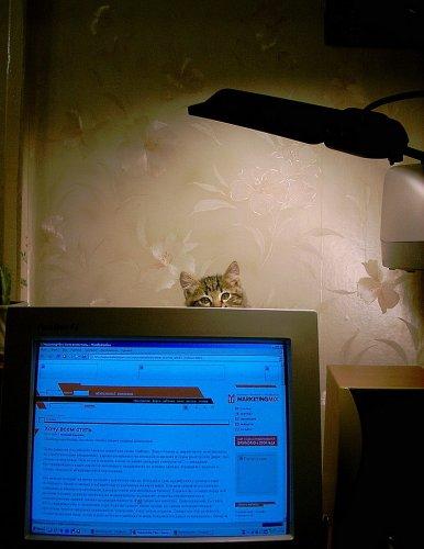 Усатые хакеры (20 фото)