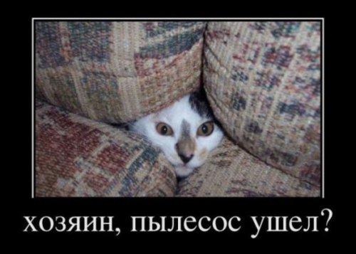 Юмор: Коты и пылесосы