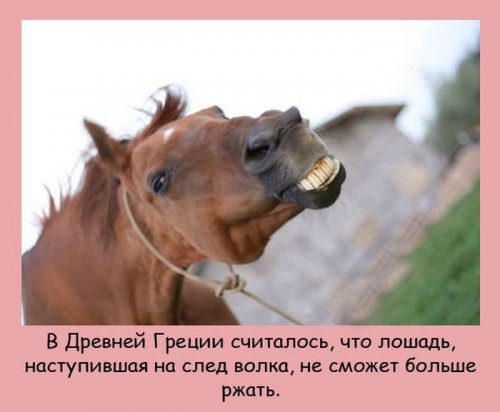 Познавательные факты из мира животных (26 фото)