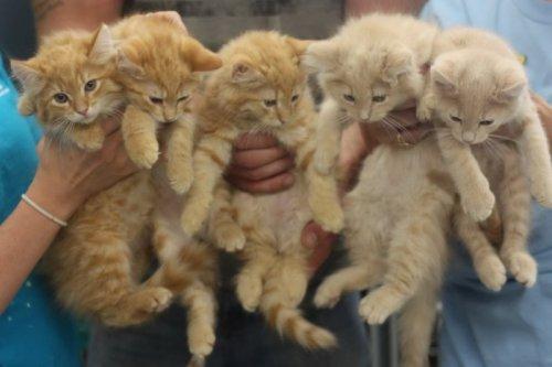 Чудесные котейки (40 фото)