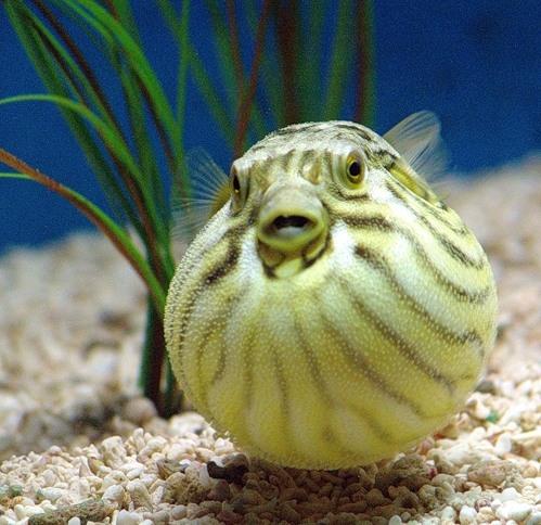 Подводное царство (30 фото)