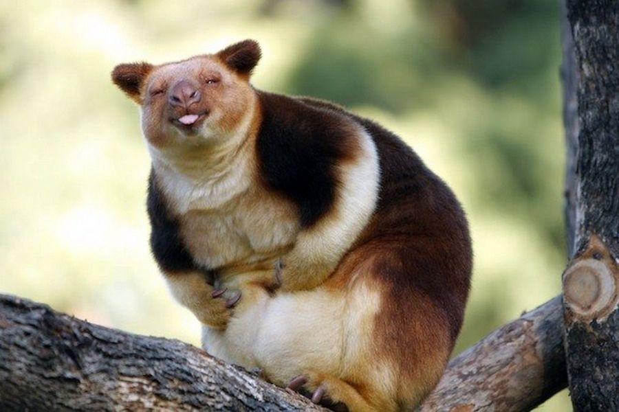 Смешные фото сумчатых животных