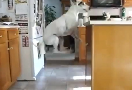 Юмор: Собака-попрыгун