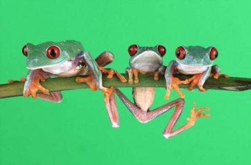 Три лягушки