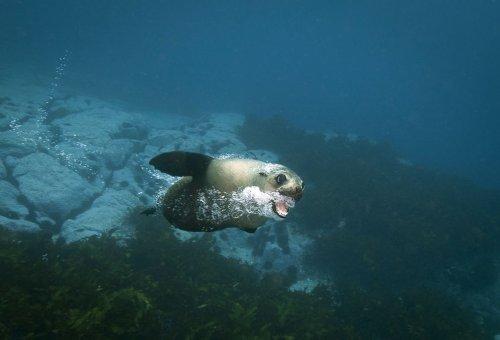 Игривые морские котики (9 фото)