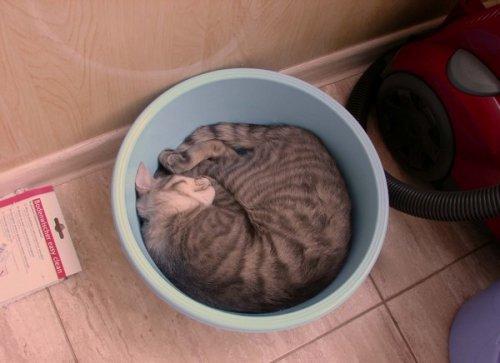 """Юмор: Жидкие"""" коты (12 фото)"""