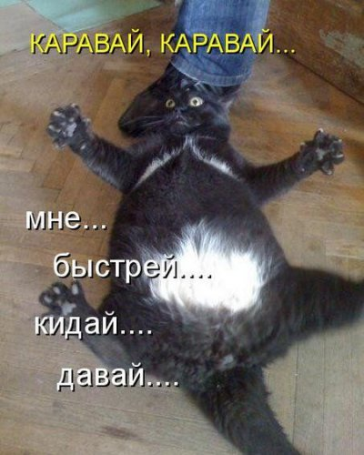 Субботняя котоматрица (30 фото)