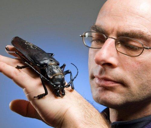 Самый большой жук в мире (7 фото)