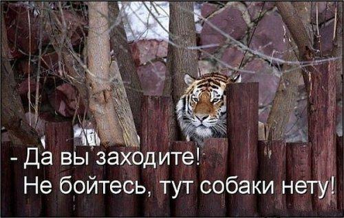 Смешные и милые зверята (40 фото)
