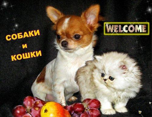 Собаки и кошки в одной обложке  (22 фото)
