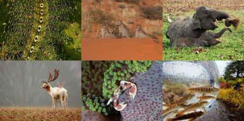 Лучшие фотографии животных от National Geographic (12 фото)