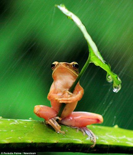 Лягушка под зонтиком (3 фото)
