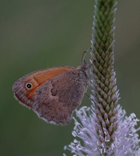 Красивый мир бабочек (25 фото)