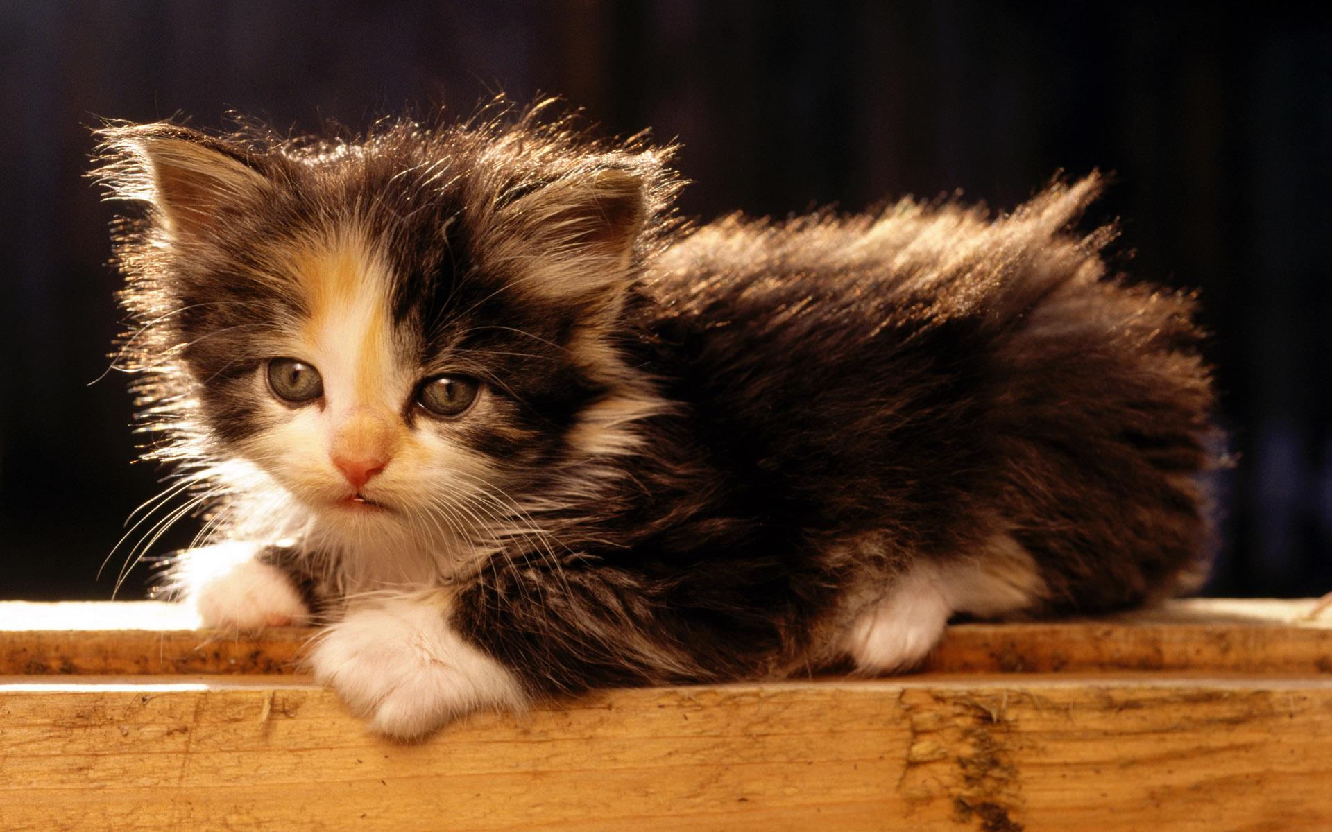 каждый маленькие кошачьи картинки значит, что