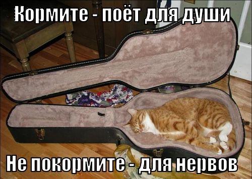 ЛОЛ котэ (40 фото)