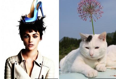 Коты подражают моделям (15 фото)