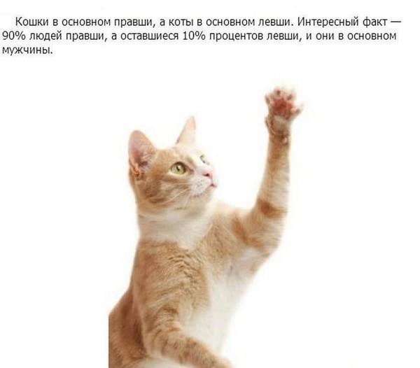 Познавательно о кошках (17 фото)