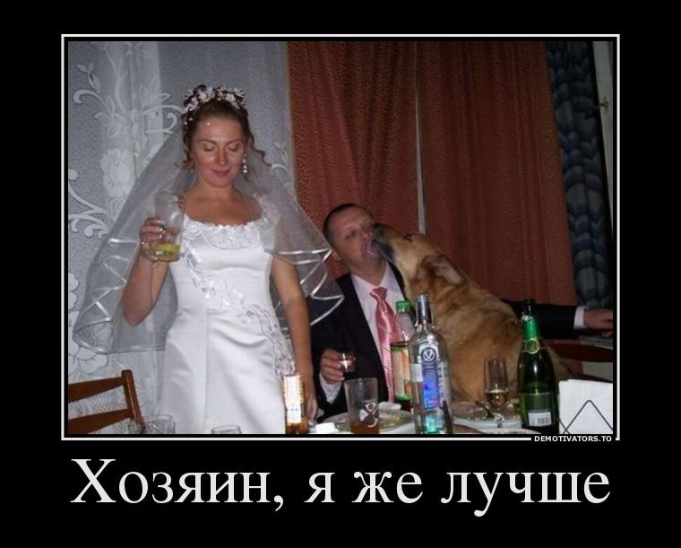 Васильки красивые, картинки про свадьбу с надписями смешные до слез