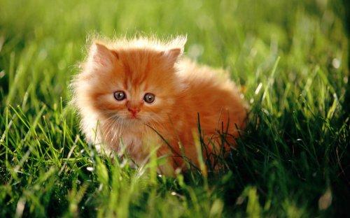 Котенок на траве  № 2959643 бесплатно