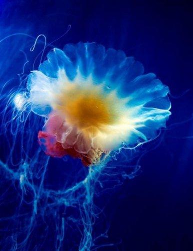 Красивые и загадочные медузы (26 фото)