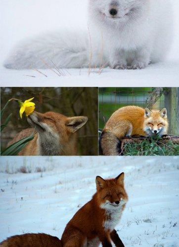 Забавные животные (40 фото)