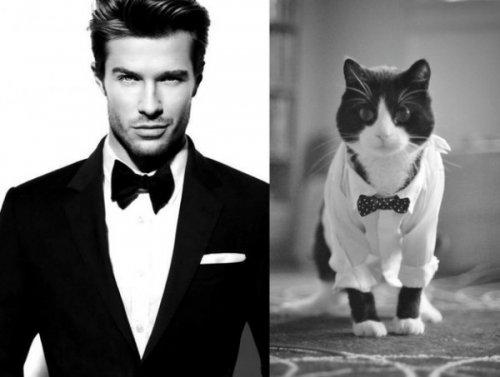 Юмор:Кошки подражают знаменитостям (12 фото)