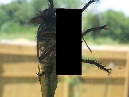 Битва осы и огромной мухи (5 фото)