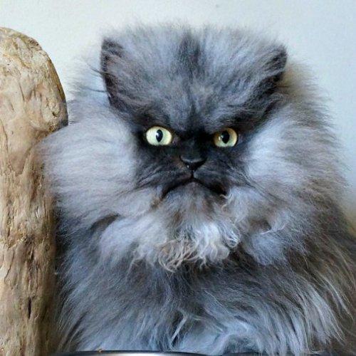 Кот по кличке «Полковник Мяу» попал в Книгу рекордов Гиннесса