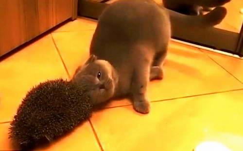 """Юмор: """"Расческа"""" для кота"""