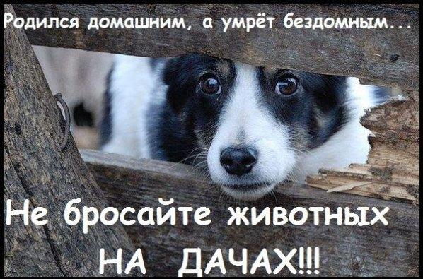 Не бросайте животных на дачах!