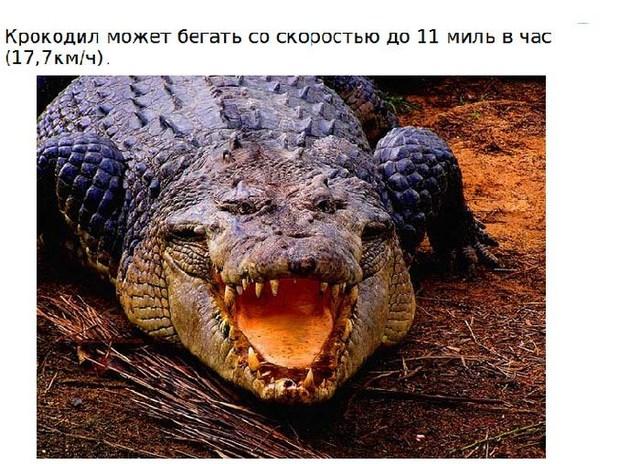Интересно о крокодилах (15 фото)