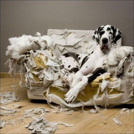 Побег собаки из кухни стал хитом Интернета