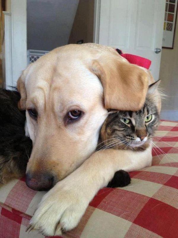 Животные кошки собаки приколы картинки, поздравлениями вербного