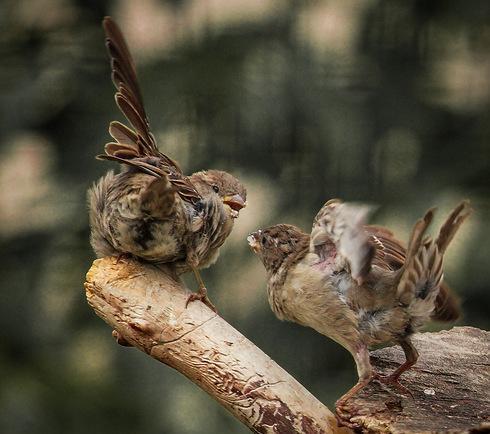 Милые и забавные зверюшки (40 фото)