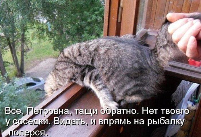 Картинки с котами и надписями матами котами, открытки подруге