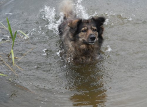 Хорошо плывём! (15 фото)