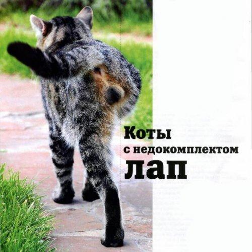 Коты с недокомплектом лап (5 фото)