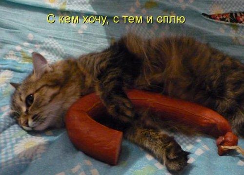 Весёлая котоматрица (50 фото)
