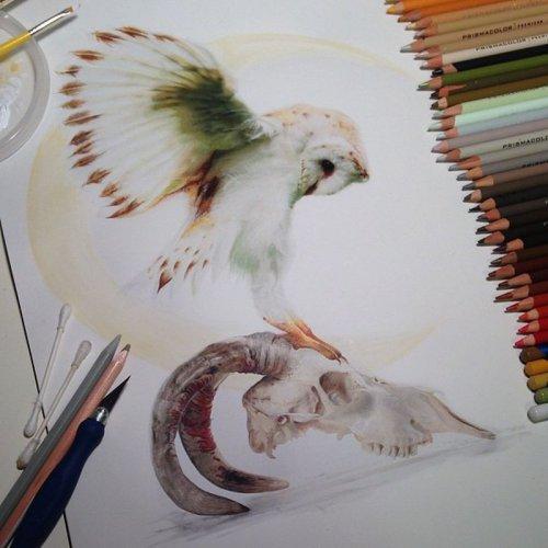 Живые рисунки художницы Карла Миалинн (14 фото)
