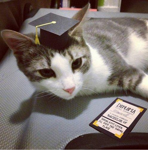 Шляпы для котов (15 фото)