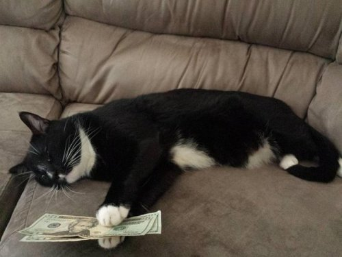Котярка и доллары (3 фото)