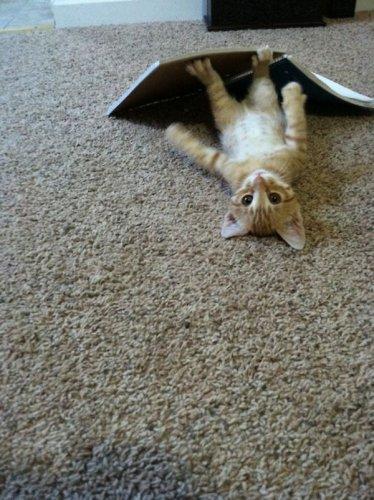 Ох уж эти кошки (40 фото)