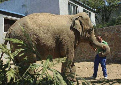 Слонёнок проплакал 5 часов из-за разлуки с матерью (4 фото)